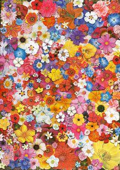 Flowers - Ben Giles