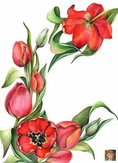 Botanical Drawings, Botanical Illustration, Botanical Prints, Flower Boarders, Tulip Drawing, Botanical Flowers, Silk Painting, Pictures To Draw, Vintage Floral