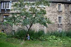 Family Travel Journal: Oxford, UK with a Toddler - A rowan tree at St. Edmund Hall