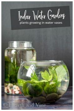 Grow your own indoor water garden with simple supplies in no time. These pretty desktop water gardens are low maintenance with simple water plants and marimo moss balls pretty the beauty of nature into your home. garden How to Make an Indoor Water Garden