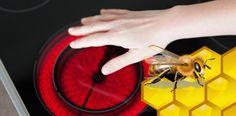 Nové výskumy dokázali, že med, tradičný liek na popáleniny, skutočne funguje!