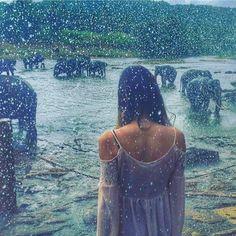 Elephants and Rain @Pinnawala - Sri Lanka https://www.srilankatravelandtourism.com/beautiful/wildlife/wildlife-srilanka.php . Explore Sri Lanka with Us. 94 777854022 (Mobile-WhatsApp-Viber) .  Photo by @steph.isabella  #srilanka_travel #sunset #elephant #exploresrilanka#srilankatravel #waterfalls #hikkaduwa#unawatuna #colombo #travel#travelblog #traveller#traveler#travelling#travelingram#australia #usa #england #brazil #russia #spain #saudi #germany #china #canada #italy #switzerland…