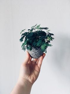 Oddly Intriguing Indoor Plants You've Probably Never Heard Of Unus. - Oddly Intriguing Indoor Plants You've Probably Never Heard Of Unusual Indoor House Pl - Unusual Plants, Cool Plants, Cool Indoor Plants, Diy Plante, Plantas Indoor, Sensitive Plant, Flower Pot Design, Plants Are Friends, Foliage Plants