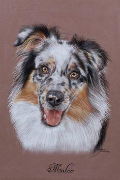 Marion Tubiana Animal Paintings, Animal Drawings, Art Drawings, Dog Pencil Drawing, Colored Pencil Artwork, Dog Artist, Dog Artwork, Art Articles, Aussies