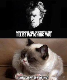 Grumpy Cat hates Sting.