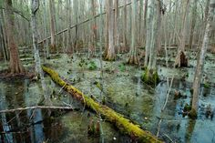 Deep in the Swamps, Archaeologists Are Finding How Fugitive Slaves Kept Their Freedom The Great Dismal Swamp was once a thriving refuge for runaways