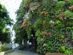 Gardens By The Bay (Singapore) - 2019 All You Need to Know Before You Go (with Photos) - Singapore, Singapore Mosquito Spray, Singapore Singapore, Before We Go, Gardens By The Bay, Tree Lighting, Out Of This World, Glass Domes, Just Amazing, Walkway