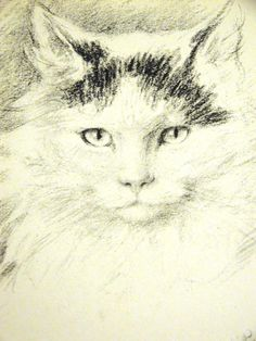 Lucy Dawson Beautiful Intense LONG HAIRED CAT 1946 Vintage Art Print Matted #Vintage