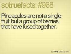 SoTrueFacts.com - Fact: #968