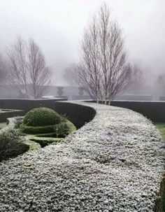 frost outlining curved topiary