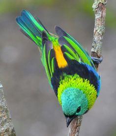un oiseau haut en couleur