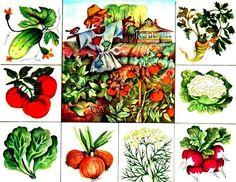 Preschool Education, Preschool Worksheets, Kindergarten Activities, Activities For Kids, Teaching Plants, Vegetable Crafts, Teaching Vocabulary, Hidden Pictures, Still Life Photos
