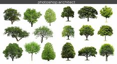 [Download] High quality tree png cutout | Arch-X