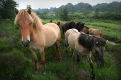Wild Horses | Flickr - Photo Sharing!