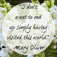 """""""I don't want to end up simply having visited this world."""" - Mary Oliver #quote"""
