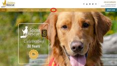 We are just goofy-crazy happy about Golden Rescue's new online store! We have taken the on-line store in-house to provide you with more selection, easier ordering, and faster delivery. Visit goldenrescue.ca and click the 'SHOP' tab to check out all the fabulous items for sale! Every purchase helps Goldens in need. #goldenretriever #rescuedog #onlineshopping #shop Donate Now, News Online, 30 Years, Rescue Dogs, Fundraising, Announcement, Learning, Store, Delivery