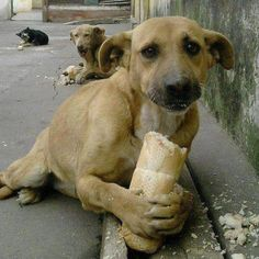cachorro faminto