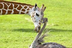 :)  #Odd animal pairings #unlikely animal companions #paw pods #animal friends