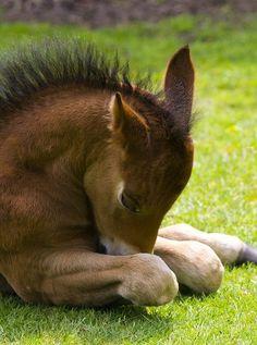sleeping horse photo