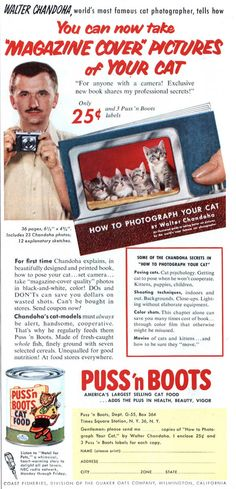 Creepy ad for a how-to book on photographing your cat