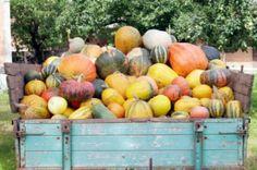 SOL BlOG POST: 7 Health Benefits of Pumpkin