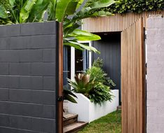 Small Tropical Gardens, Tropical Garden Design, Tropical Plants, Tropical Decor, Swimming Pools Backyard, Backyard Landscaping, Outdoor Rooms, Outdoor Living, Outdoor Decor