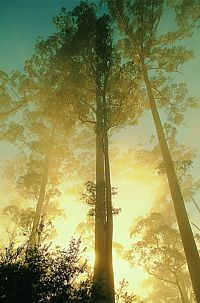 Manjimup, Australia - Lived here for 18 months, Love,love,love this place!!!