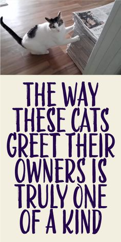 The Way These Cats Greet Their Owners Is Truly One Of A Kind! Some of these kitties are so vocal. I wonder what they are saying. Pretty Cats, Beautiful Cats, Animals Beautiful, Funny Cats, Funny Animals, Cute Animals, Crazy Cat Lady, Crazy Cats, I Love Cats