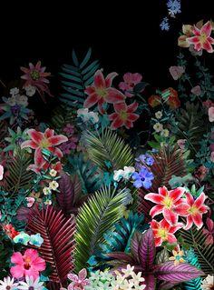 Papel de parede Tropical para Celular