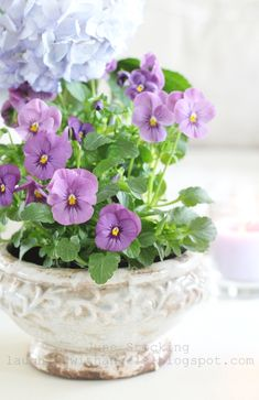 Raindrops and Roses Container Plants, Container Gardening, Vegetable Gardening, Purple Flowers, Spring Flowers, Rose Flowers, Plantas Bonsai, Raindrops And Roses, Cottage Garden Design