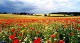Sheringham, North Norfolk