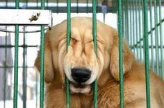 Funny Dog http://evobig.blogspot.com/2012/08/kumpulan-foto-hewan-yang-bikin-ngakak.html