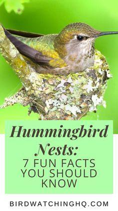 Hummingbird Migration, Hummingbird Nests, Hummingbird Plants, Hummingbird House, Hummingbird Meaning, How To Attract Birds, How To Attract Hummingbirds, Humming Bird Feeders, Humming Birds