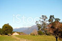 Early Morning Rural Scene, New Zealand royalty-free stock photo