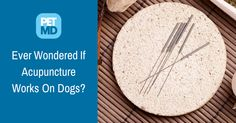 Does your pet get upset when his paws or dewclaws are touched? If he is then you might want to consider acupuncture!