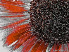 Creative Sunflower