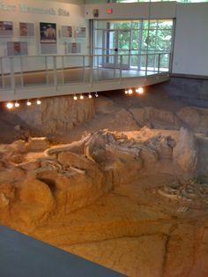 Mammoth Digs in Waco Texas