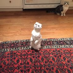 calvin instagrammed this picture of Olivia being a meerkat and meredith being a creeper