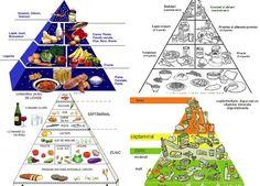 Bazele nutritiei, piramida si compozitia alimentelor (tabel complet)