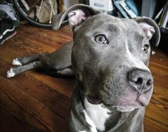 Love Blue Nose Pits