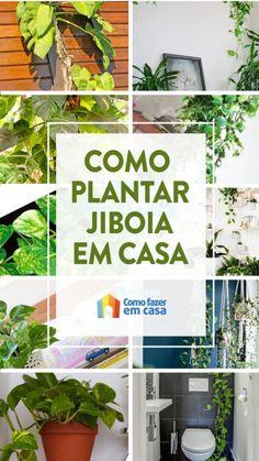 Como plantar jiboia em casa - Segredinhos | Como fazer em casa Plantar, Garden Trees, Raised Garden Beds, Floral, Flowers, Outdoor, Home Decor, Gardening, Hydroponic Gardening