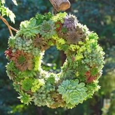 How to make a living succulent wreath via Garden Therapy, featured @savedbyloves