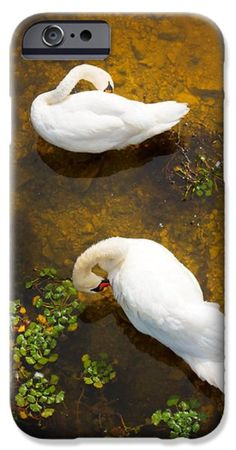 Two swans with sun reflection on water. iPhone Case by Jan Brons.  Two swans with sun reflection on shallow water.  This has been a real challenge to take this photo of these swans as I had to find a high point to shoot downwards.   Digital download of this image is available at http://www.jbstockimages.com/image/two-swans-with-sun-reflection-on-shallow-water/