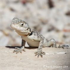 Scaling Back - Lizard, Nature, Rhodes, Greece, Wildlife, Photography
