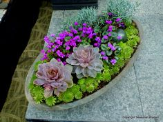 Succulents in different colors were mixed with purple violets to create this clever container.