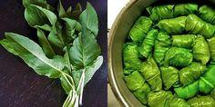 Stevia, Diabetes, Spinach, Health Fitness, Vegetables, Foods, Kitchen, Desserts, Medicine