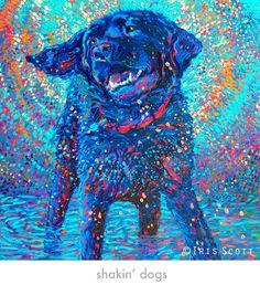 My BLUE DOG , CUMBRE'  .  Miss you old Boy......