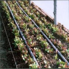 Winter Vegetables in Your Hoop House - Organic Gardening - MOTHER EARTH NEWS