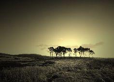 Pola, Drzewa