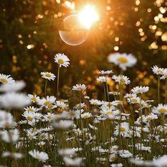 Beautiful flowers dancing with bubbles in the sunset Wild Flowers, Beautiful Flowers, Sun Flowers, Fresh Flowers, Image Nature, Nature Nature, Vsco Nature, Flower Aesthetic, Flower Wallpaper
